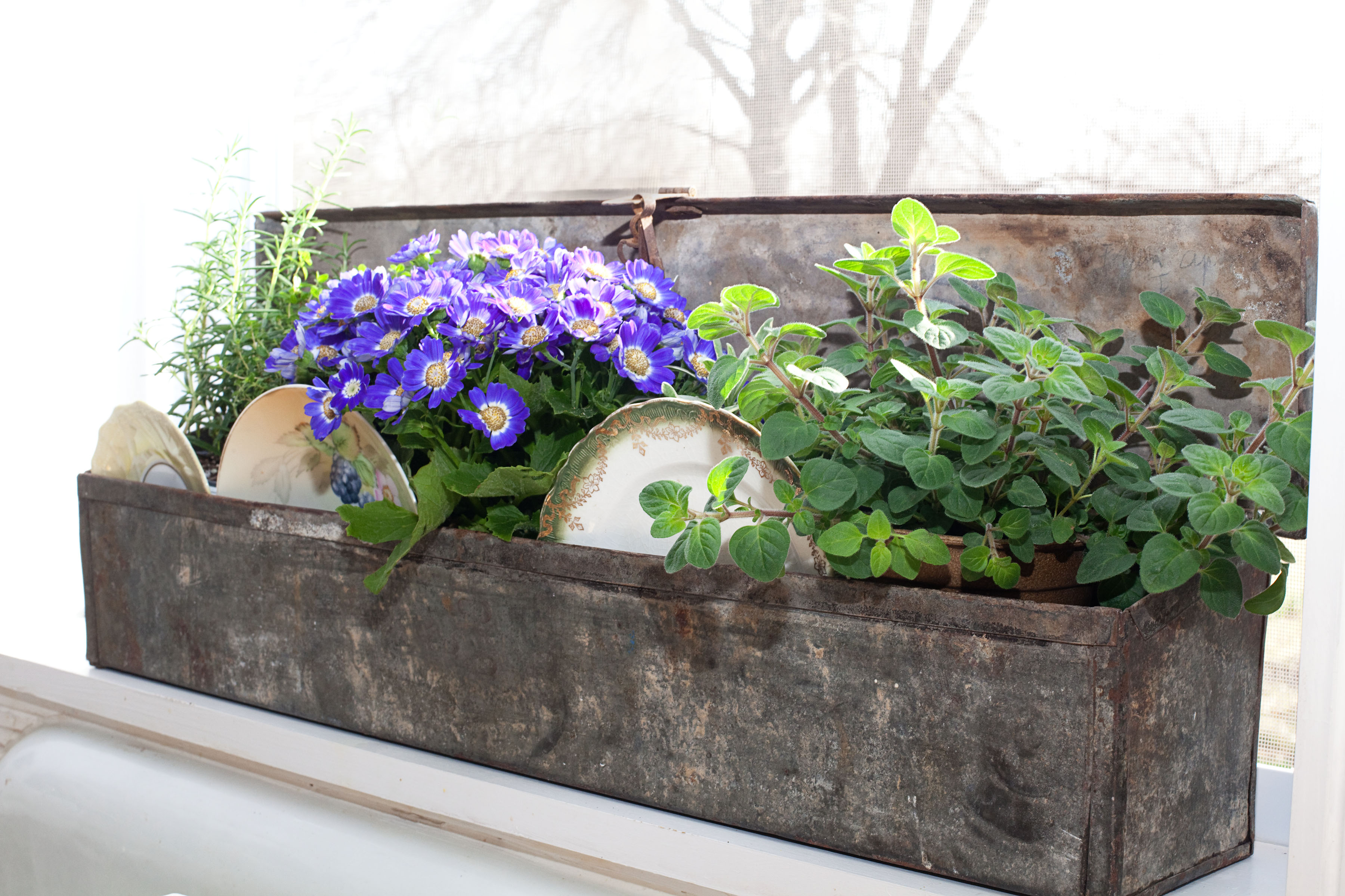 Herb Planter For The Kitchen