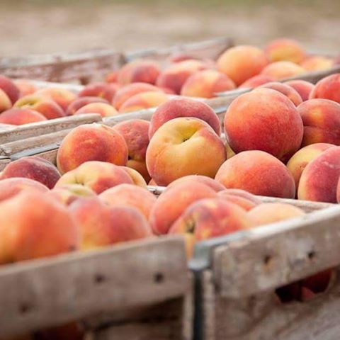 Fresh peaches at the farmers market Im thinking cobbler peacheshellip