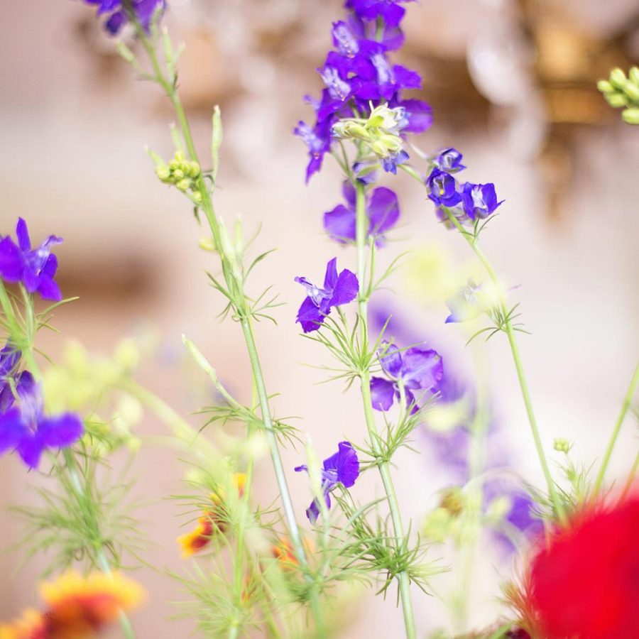 The morning light is beautiful garden flowers igdaily canon bokeh